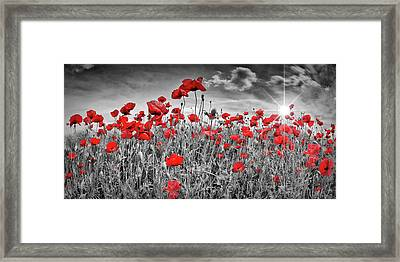 Idyllic Field Of Poppies With Sun Framed Print by Melanie Viola