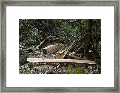 Illegal Logging Framed Print by Andrew Routh