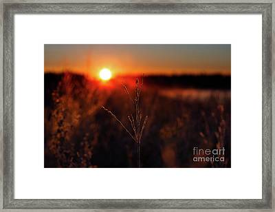 Illuminated Framed Print by Ian McGregor