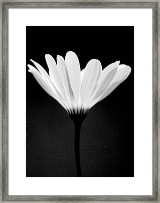 Illuminated Lady Framed Print by Julie Lueders