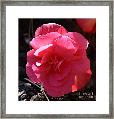 Illumination  Framed Print by Chalet Roome-Rigdon