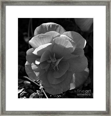 Illumination In Monochrome Framed Print by Chalet Roome-Rigdon