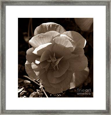Illumination In Sepia Framed Print by Chalet Roome-Rigdon