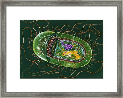 Illustration Of Structure Of Salmonella B Framed Print by John Bavosi