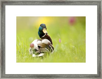 I'm Too Sexy For This Site Framed Print by Roeselien Raimond