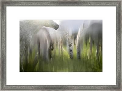Impression Framed Print by Milan Malovrh