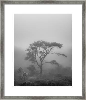 In A Soft Fog Framed Print by Joseph Smith