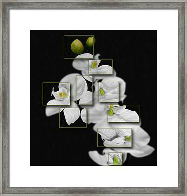 In And Out Of Focus 2 Framed Print by Cecil Fuselier