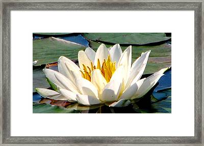 In Bliss Framed Print by Angela Davies