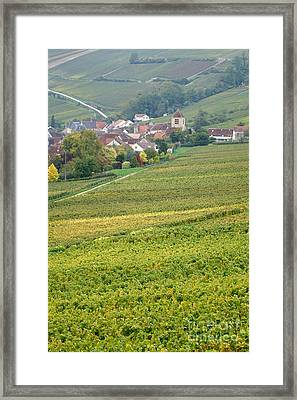In Champagne Framed Print by Olivier Le Queinec