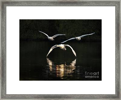 In Formation Framed Print by Richard Garvey-Williams