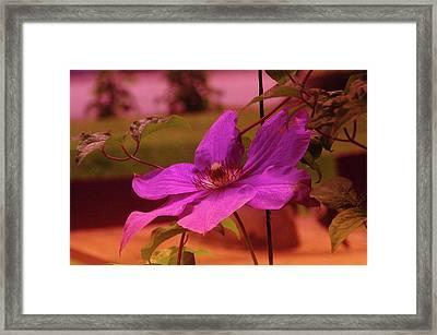 In Full Blue Blossom  Framed Print by Jeff Swan
