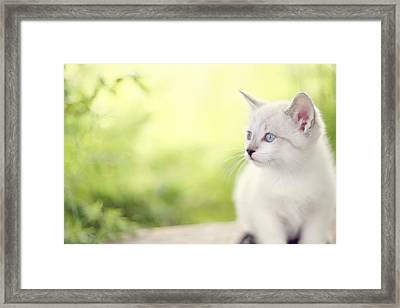 In Her Eyes Framed Print by Amy Tyler