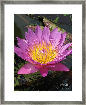 In Position Framed Print by Amanda Barcon
