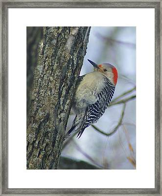 In The Cold Framed Print by Robert Pearson