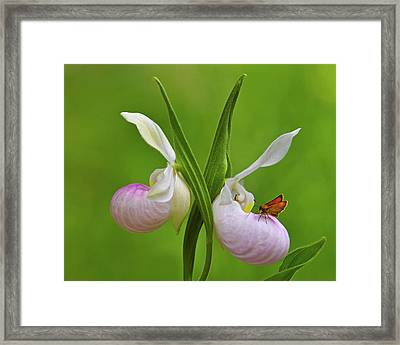 In The Fen Framed Print by Tony Beck