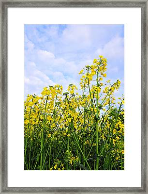 In The Field Framed Print by Svetlana Sewell