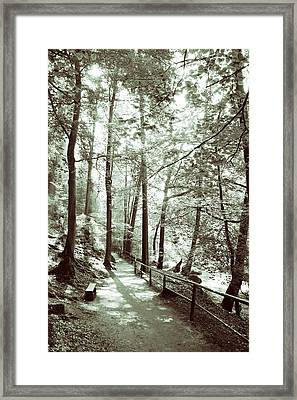 In The Forest Framed Print by Dominika Aniola