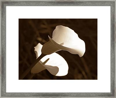 In The Light Calla Lilies Sepia Framed Print by Jennie Marie Schell