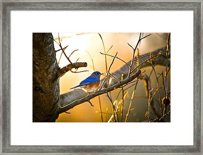 In The Light Framed Print by Shelby  Young