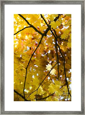 In The Light  Framed Print by Tim Gainey