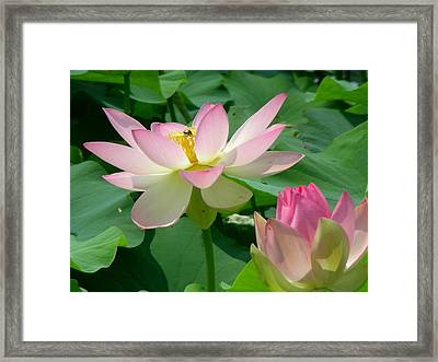 In The Midst Of Beauty Framed Print by Peter  McIntosh