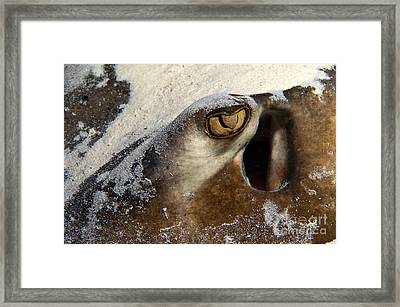 In The Sand Framed Print by Aaron Whittemore