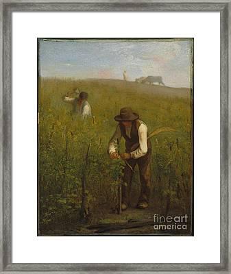 In The Vineyard  Framed Print by Millet