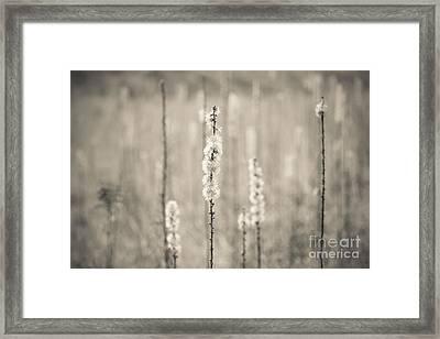 In The Wild Grass Framed Print by Ana V  Ramirez