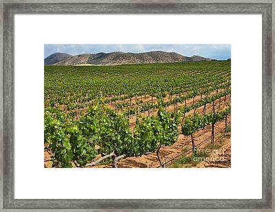 In The Vinyard Framed Print by Dan Holm