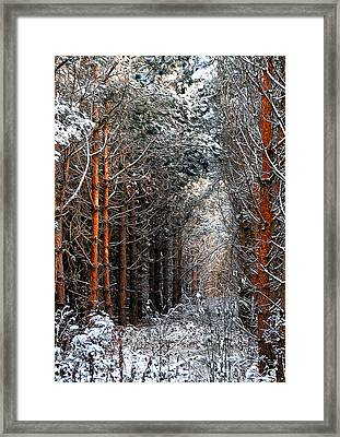 In To The Light Framed Print by Svetlana Sewell