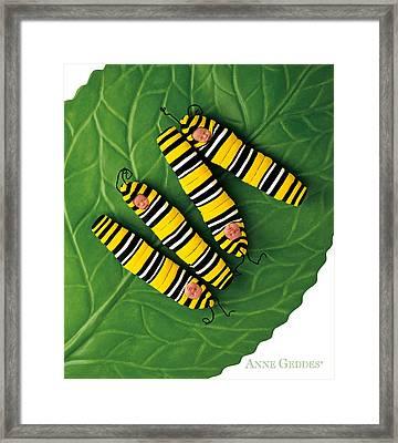 Inch Worms Framed Print by Anne Geddes