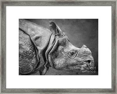 Indian Rhino Profile Framed Print by Jamie Pham