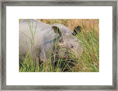 Indian Rhinoceros, India Framed Print by B. G. Thomson