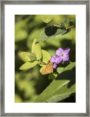 Indian Skipper Framed Print by Thomas Young
