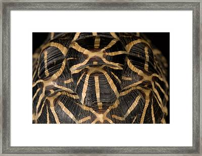 Indian Star Tortoise Geochelone Elegans Framed Print by Joel Sartore
