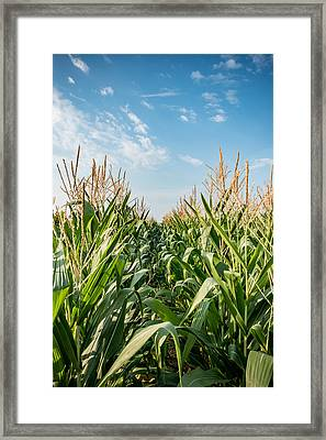 Indiana Corn Row Framed Print by Anthony Doudt