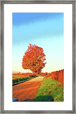 Indiana Sugar Maple Image Framed Print by Paul Price