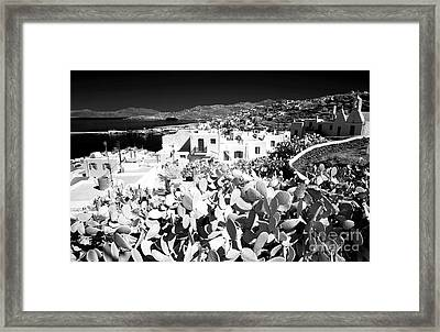 Infrared Cactus In Mykonos Framed Print by John Rizzuto