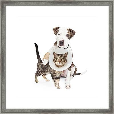 Injured Dog And Cat Together Framed Print by Susan Schmitz