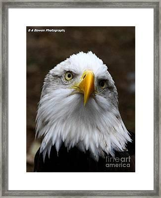 Inquisitive Eagle Framed Print by Barbara Bowen