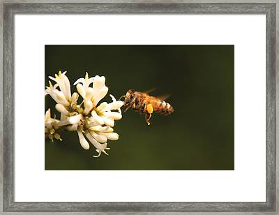 Insect - Bee - Honey I'm Home Framed Print by Mike Savad