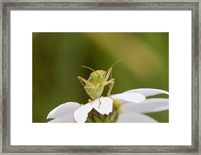 Insect Framed Print by Andre Goncalves