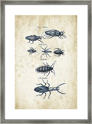 Insects - 1792 - 05 Framed Print by Aged Pixel