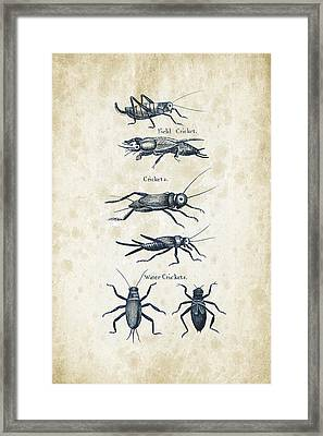 Insects - 1792 - 06 Framed Print by Aged Pixel
