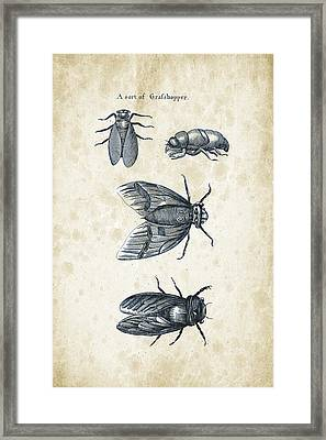 Insects - 1792 - 07 Framed Print by Aged Pixel