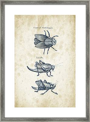 Insects - 1792 - 08 Framed Print by Aged Pixel