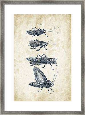 Insects - 1792 - 09 Framed Print by Aged Pixel