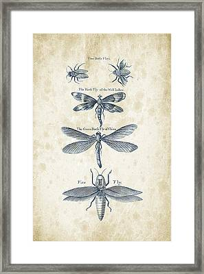 Insects - 1792 - 16 Framed Print by Aged Pixel