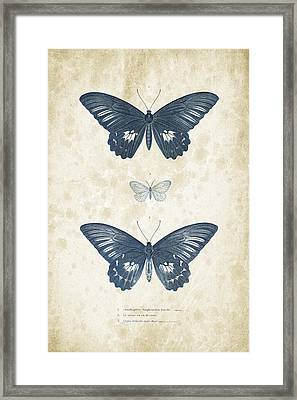Insects - 1832 - 01 Framed Print by Aged Pixel
